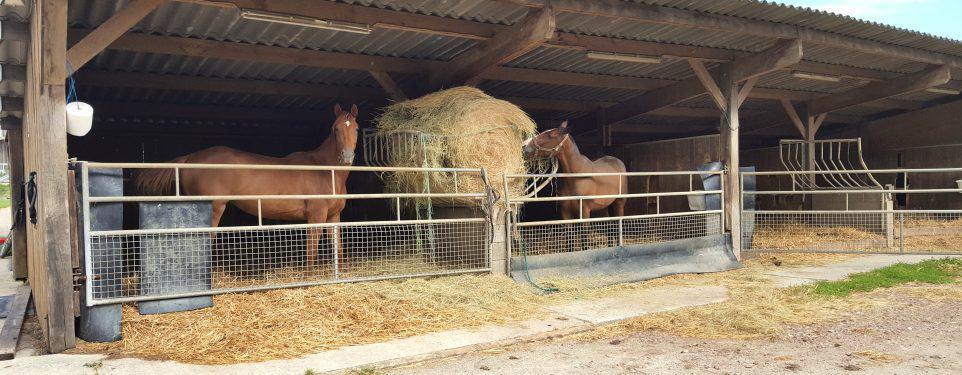 élevage chevaux mangent
