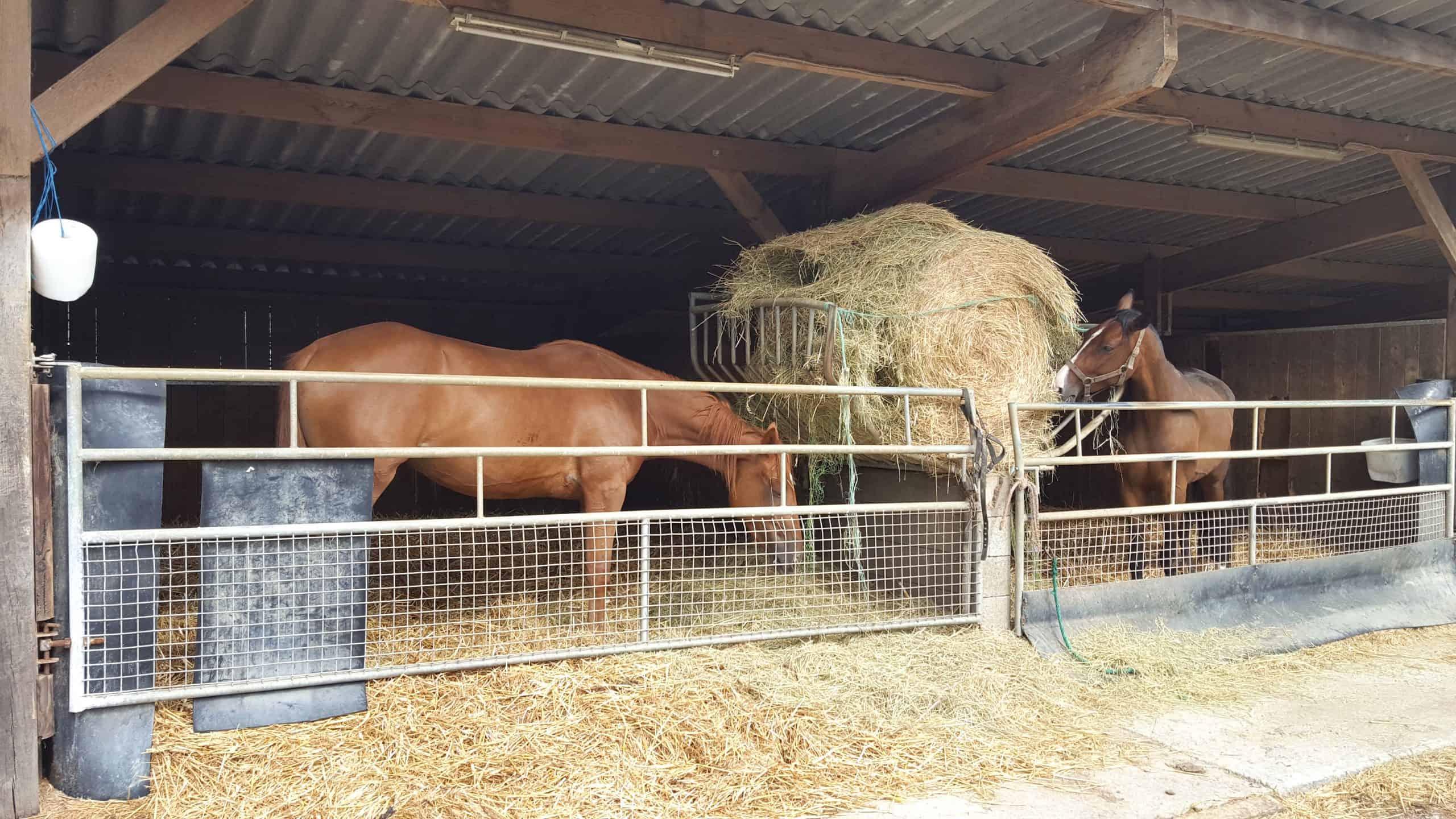 élevage chevaux boxes