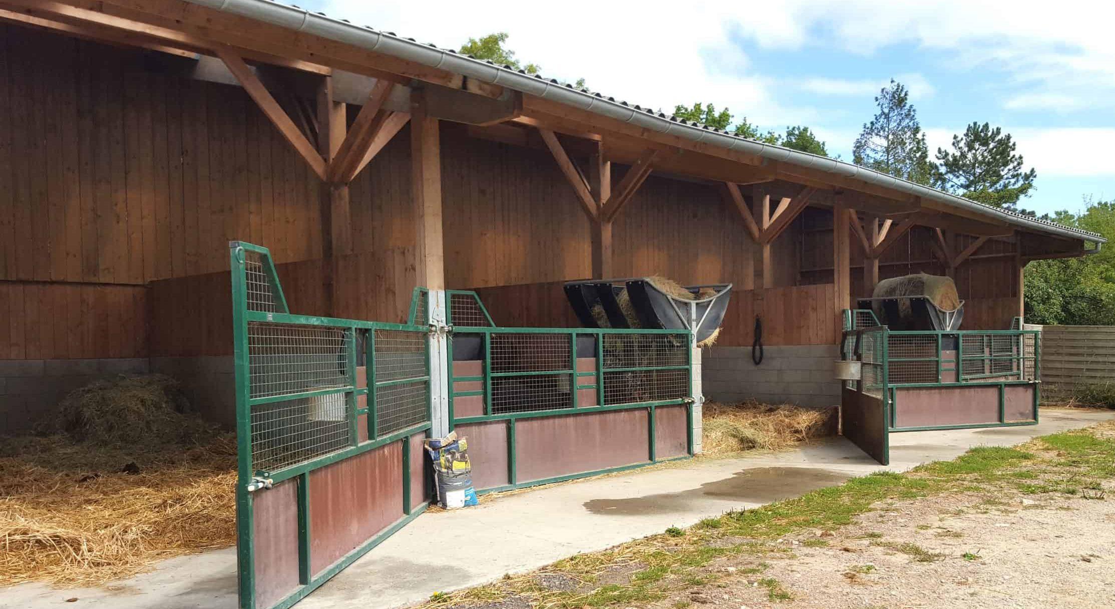 élevage chevaux grand boxes