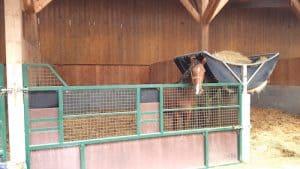 élevage d'Eurvad cheval au boxe