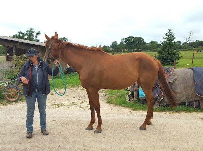 D'elle de Marions pension de chevaux en Normandie