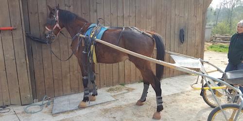pré entrainement chevaux