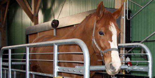 remise en forme chevaux