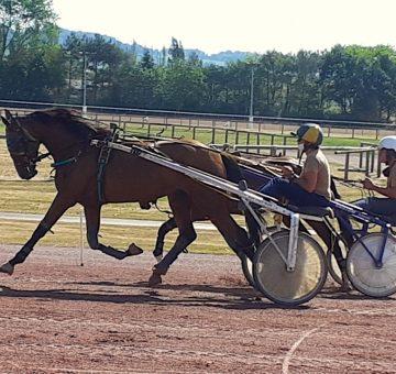 élevage chevaux hippodrome