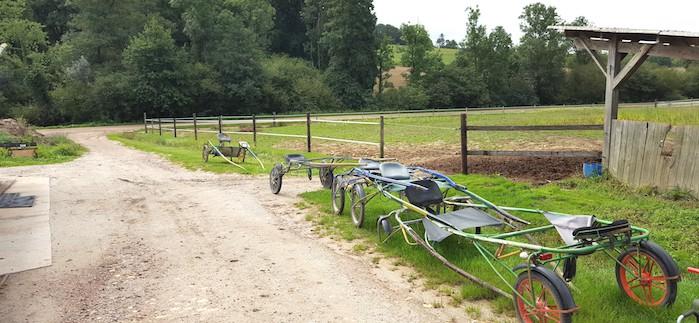 Pré entrainement de trotteurs élevage chevaux